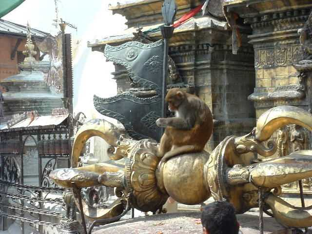 Another of the monkeys of Swayambhunath