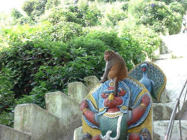One of the many monkeys of Swayambhunath