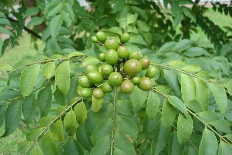 Photos courtesy of natureloveyou.sg