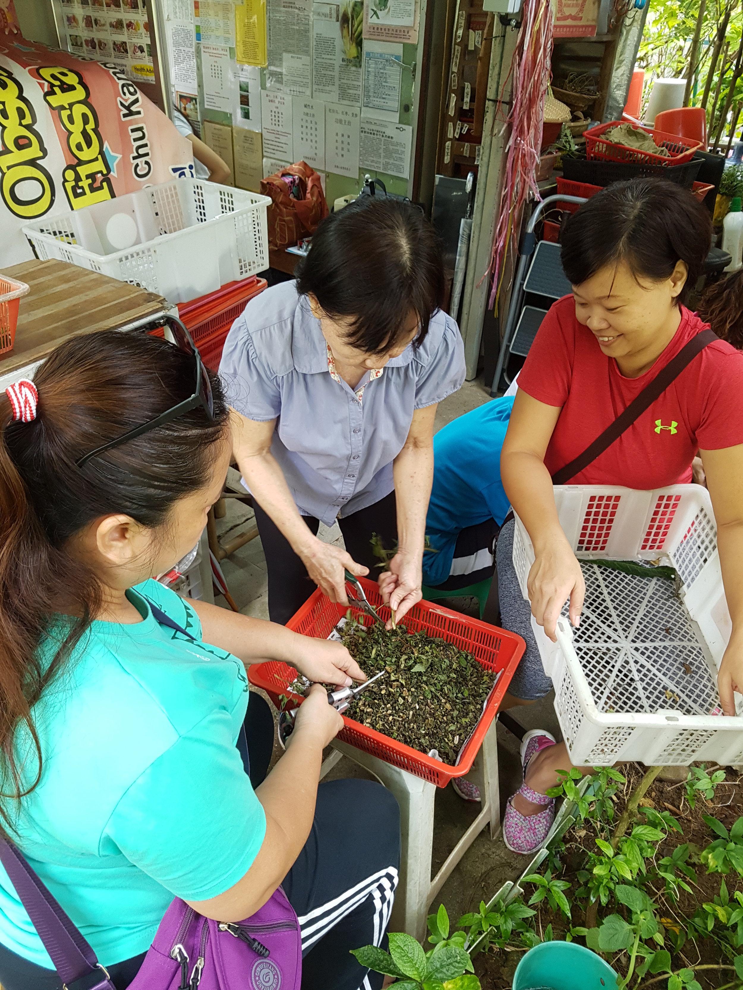 volunteer helping out.jpg
