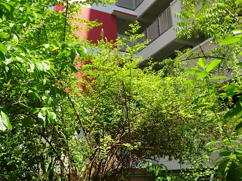 Photo  courtesy of natureloveyou.sg