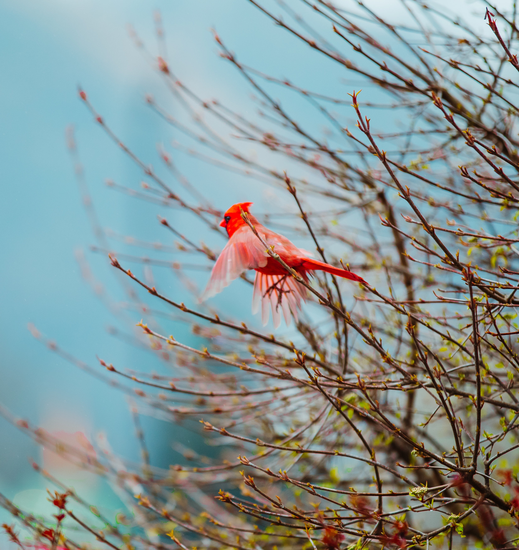 Nature Spring 2 2019-11.jpg