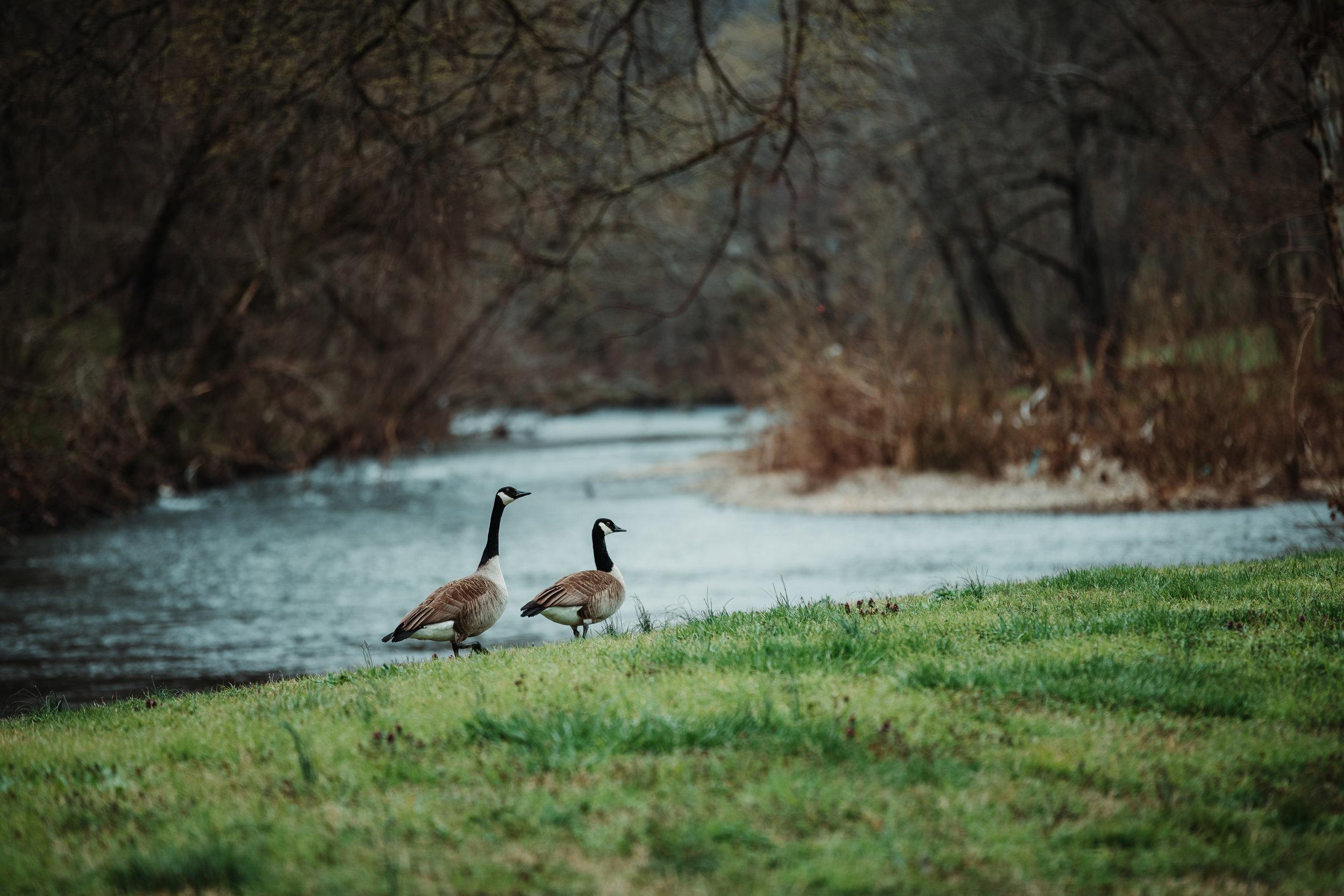 Nature Spring 2 2019-6.jpg