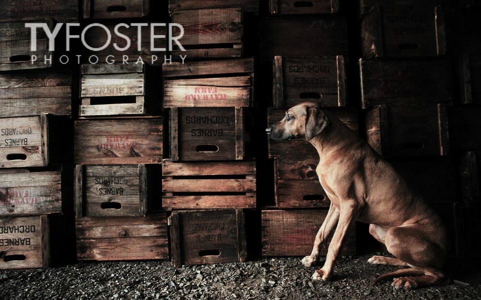 foster-5166.jpg