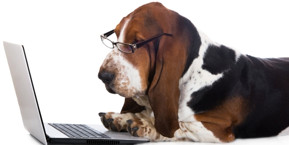 bigstock-dog-working-on-a-computer-79153348.jpg