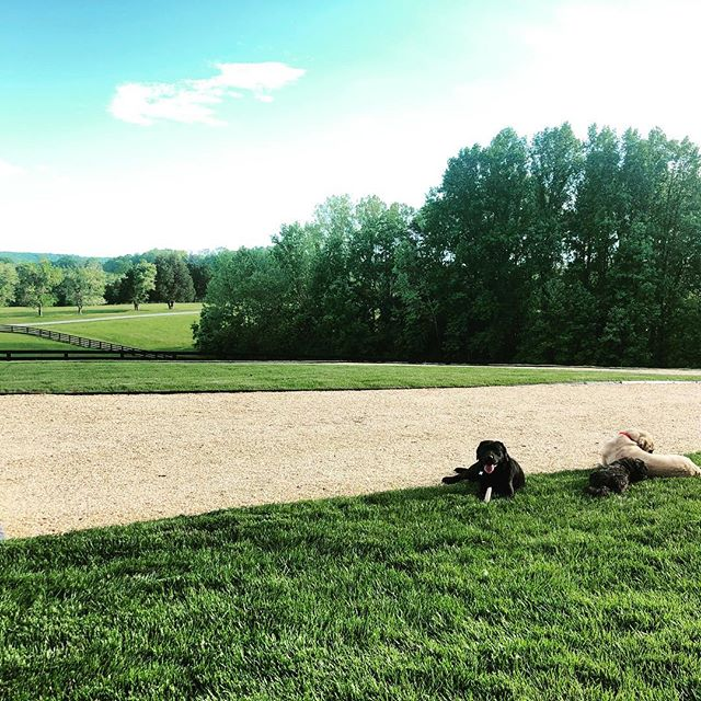 Friday after work. Golden hour. #wineoclock #writerlife #countryliving #virginia #keswickdogs #huntcountry #frontporchview