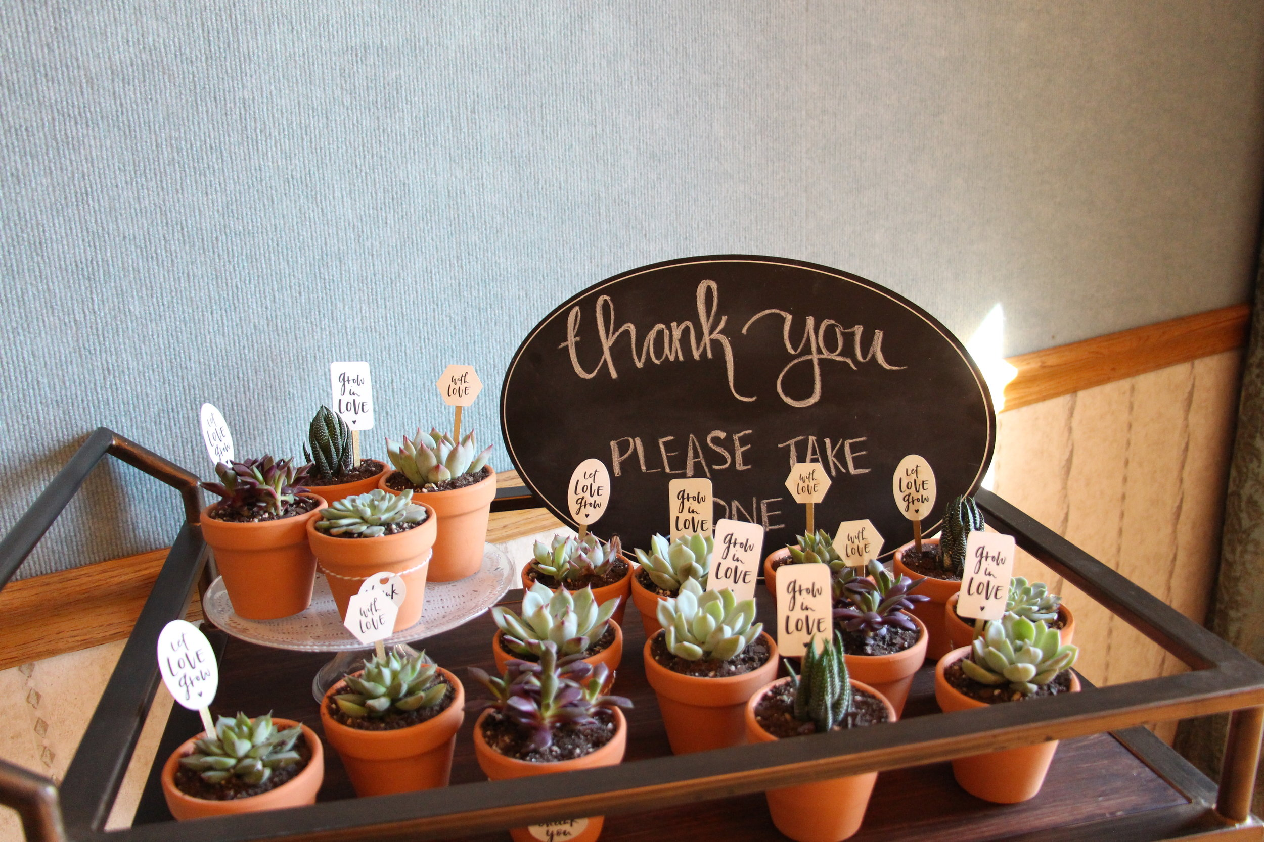 brunch and bubbly bridal shower succulent favors