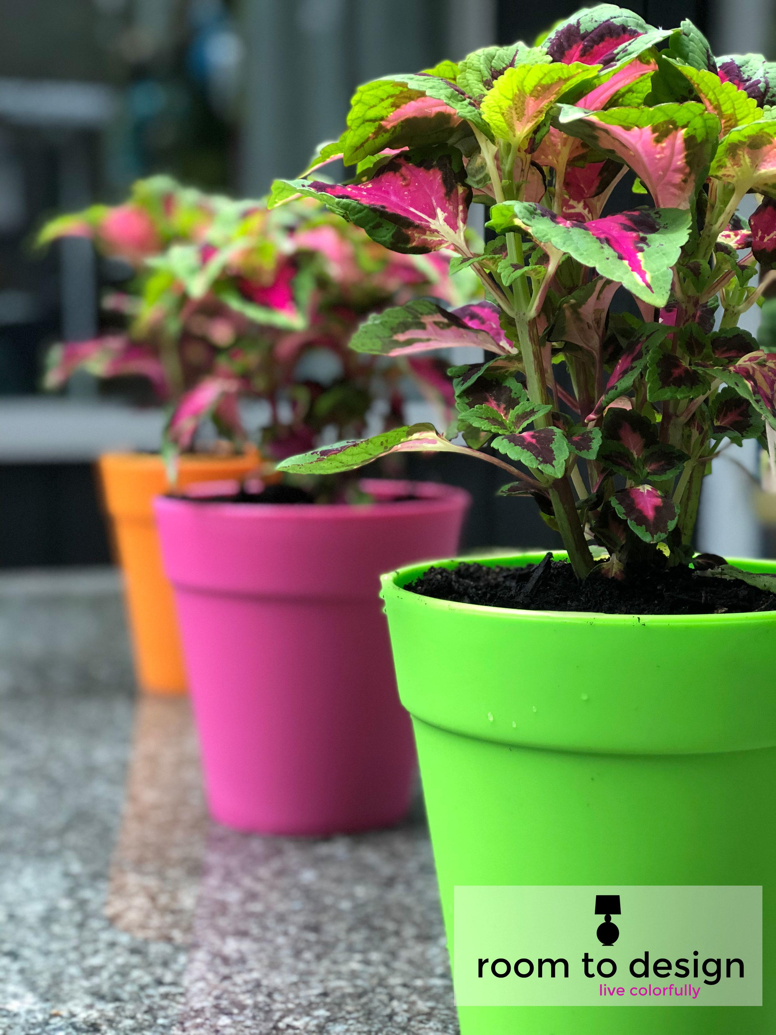 colorful-back-yard-plants.jpg