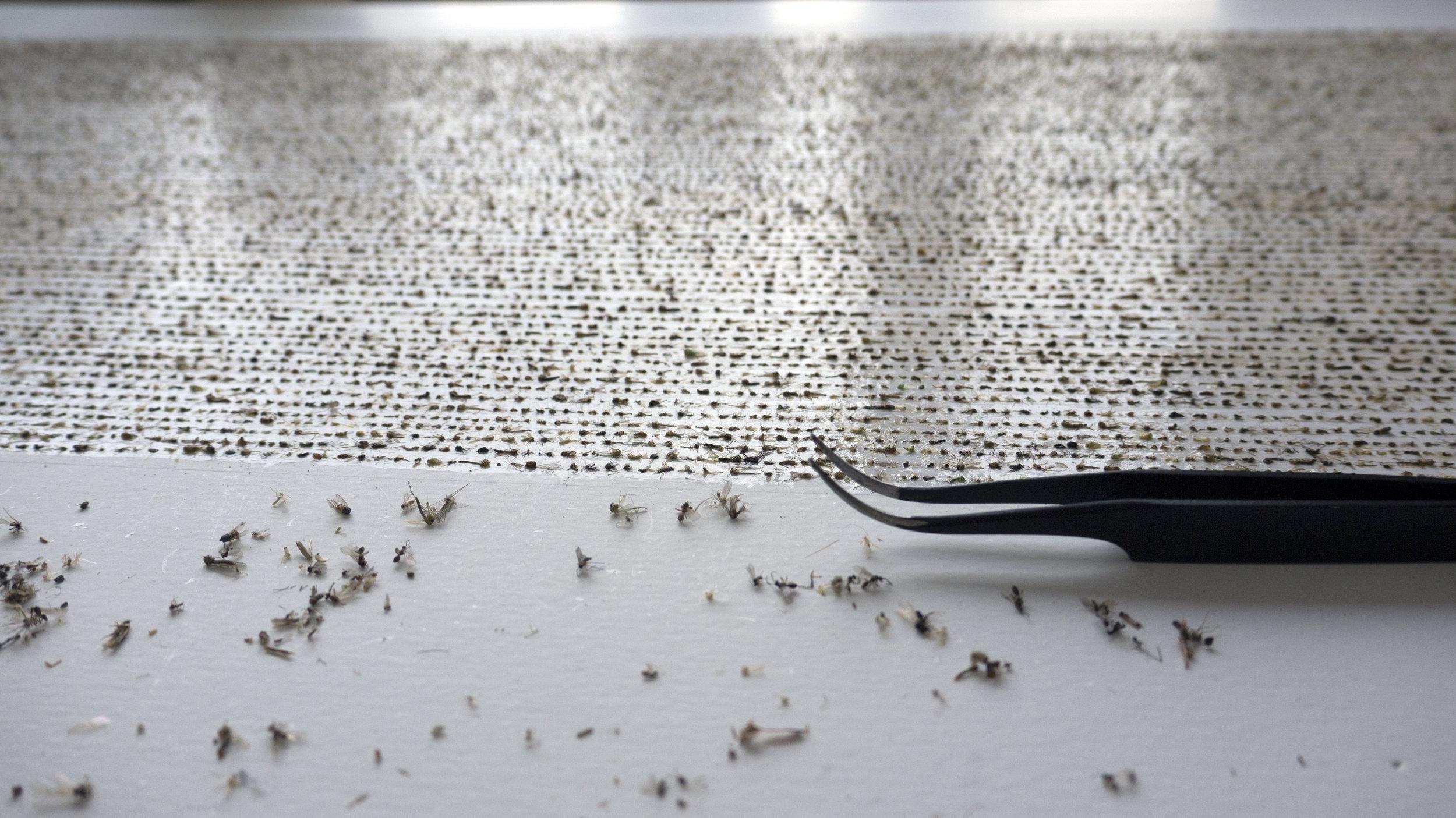Nam Hoon Kim, 18911 Enumerate death, various types of flies on board, 205 adhesive, 89 x 51 cm, 2017, Courtesy of Artist
