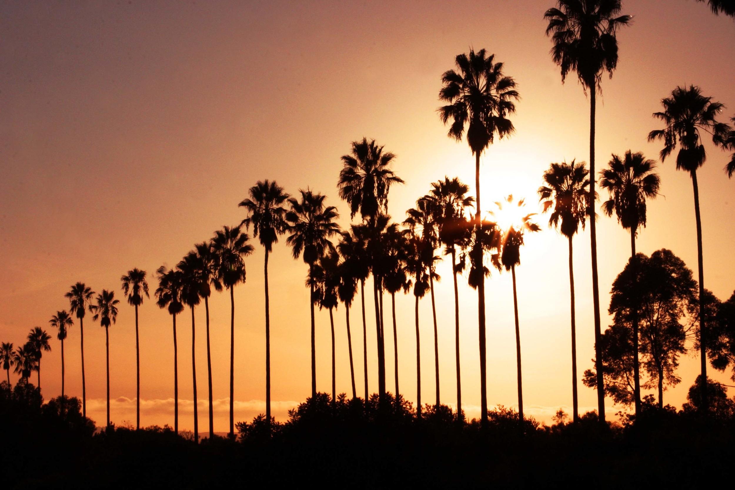 palmsW.jpg