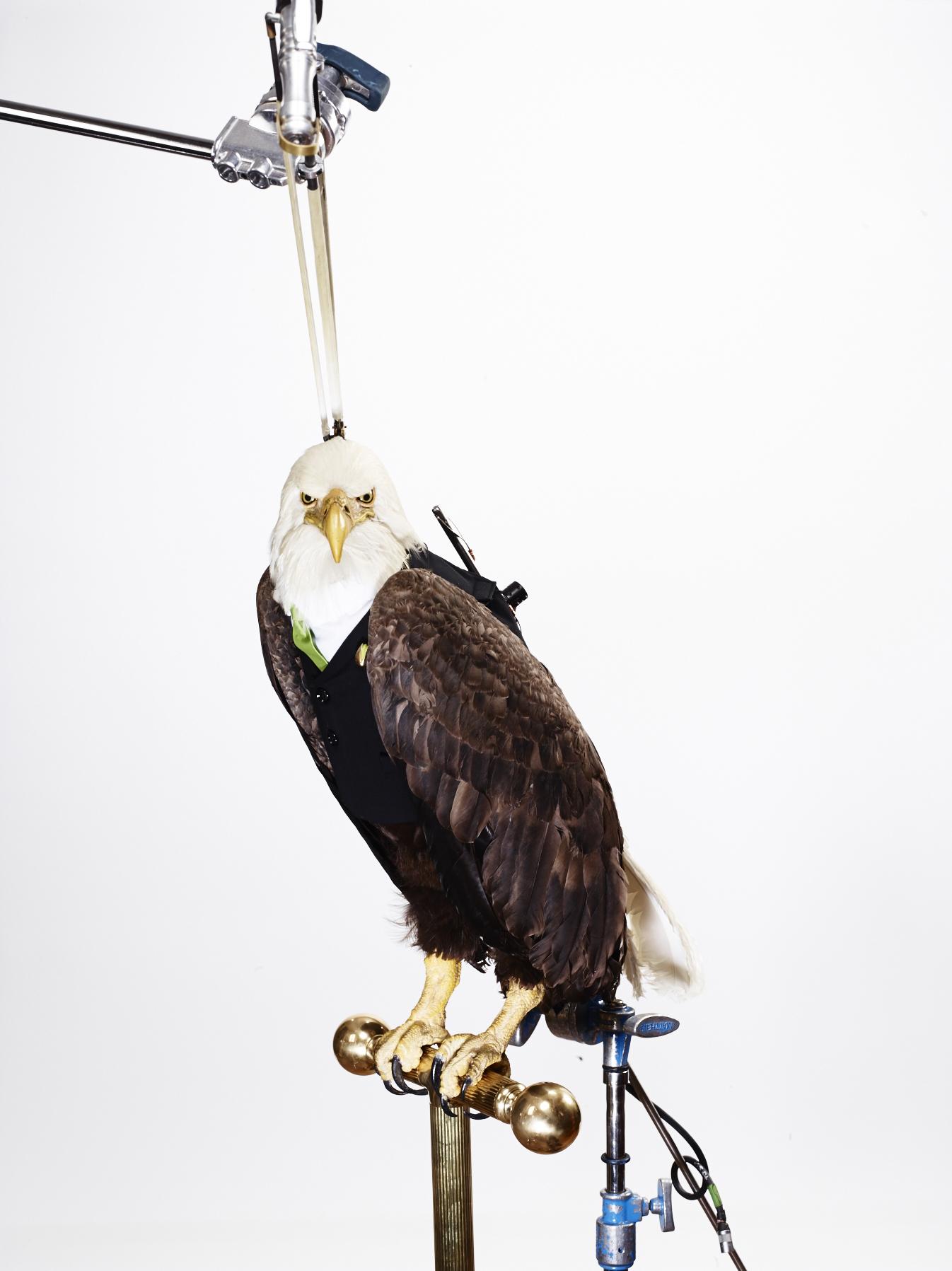 Eagle_Hero_026.jpg