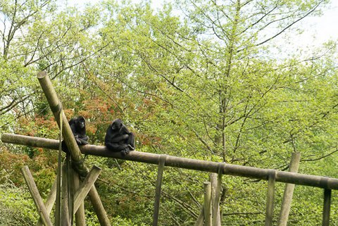 Belveau Zoo LQ-17.jpg