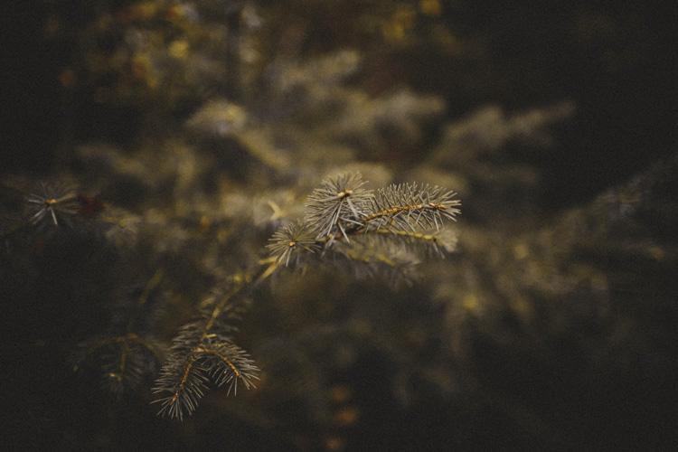 GlencoeWeddingPhotographer0035.jpg