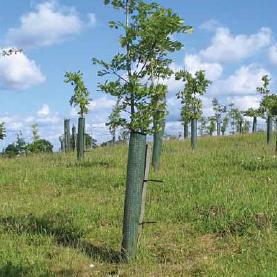 Tubex Shelterguard™ Tree Shelter
