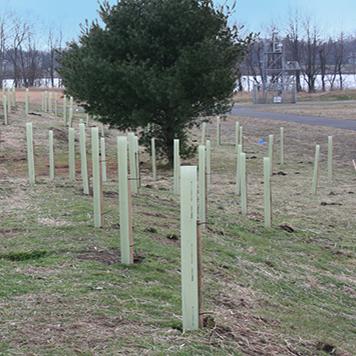 Tubex® Standard Tree Shelter