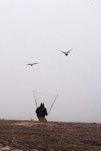 Dr. Adrian Aebsicher tries different types of traps to capture a long-tailed skua