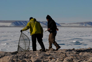 Dr. Olivier Gilg and Adrian Aebischer have just captured an ivory gull using a trap/net.