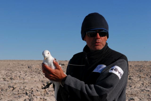 Luc Hardy ready to release an ivory gull fitted with a radio transmitter.