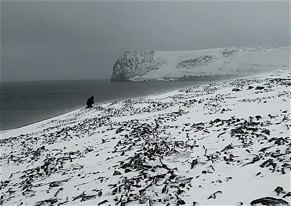 De Long island    discovery in the Russian Arctic, one stone at a time