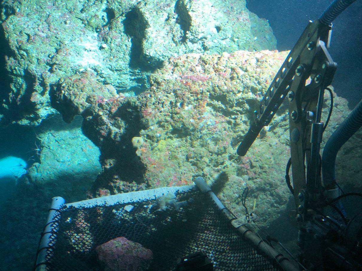 Deep Reef 1st post.jpg
