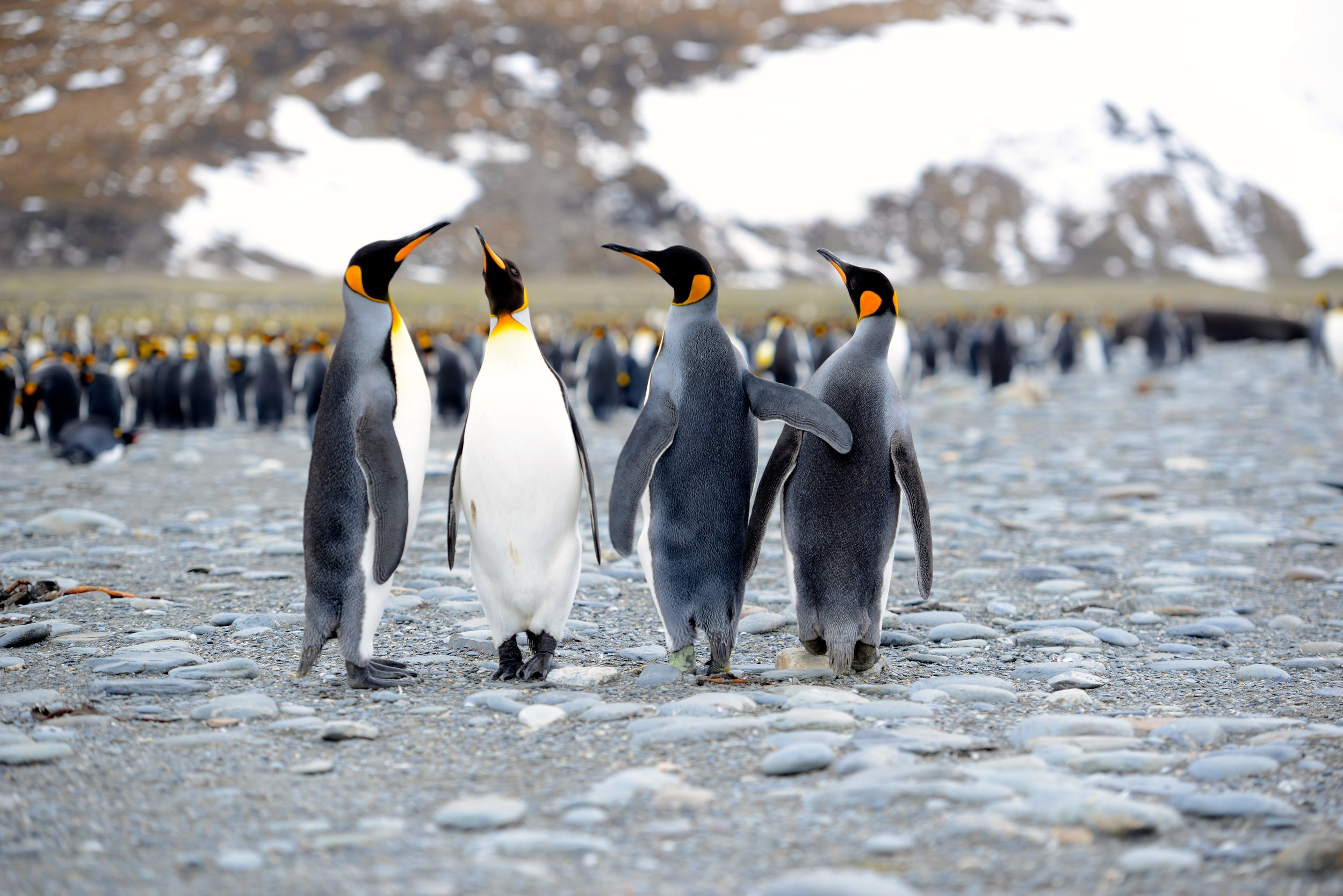 Antarctica - 2003