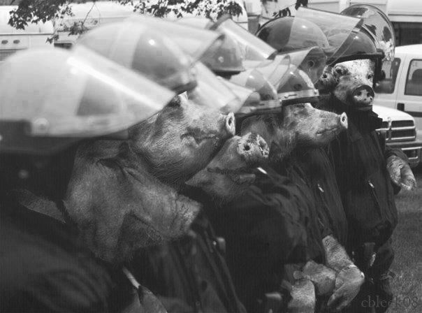 redefinedcool :     Pigs