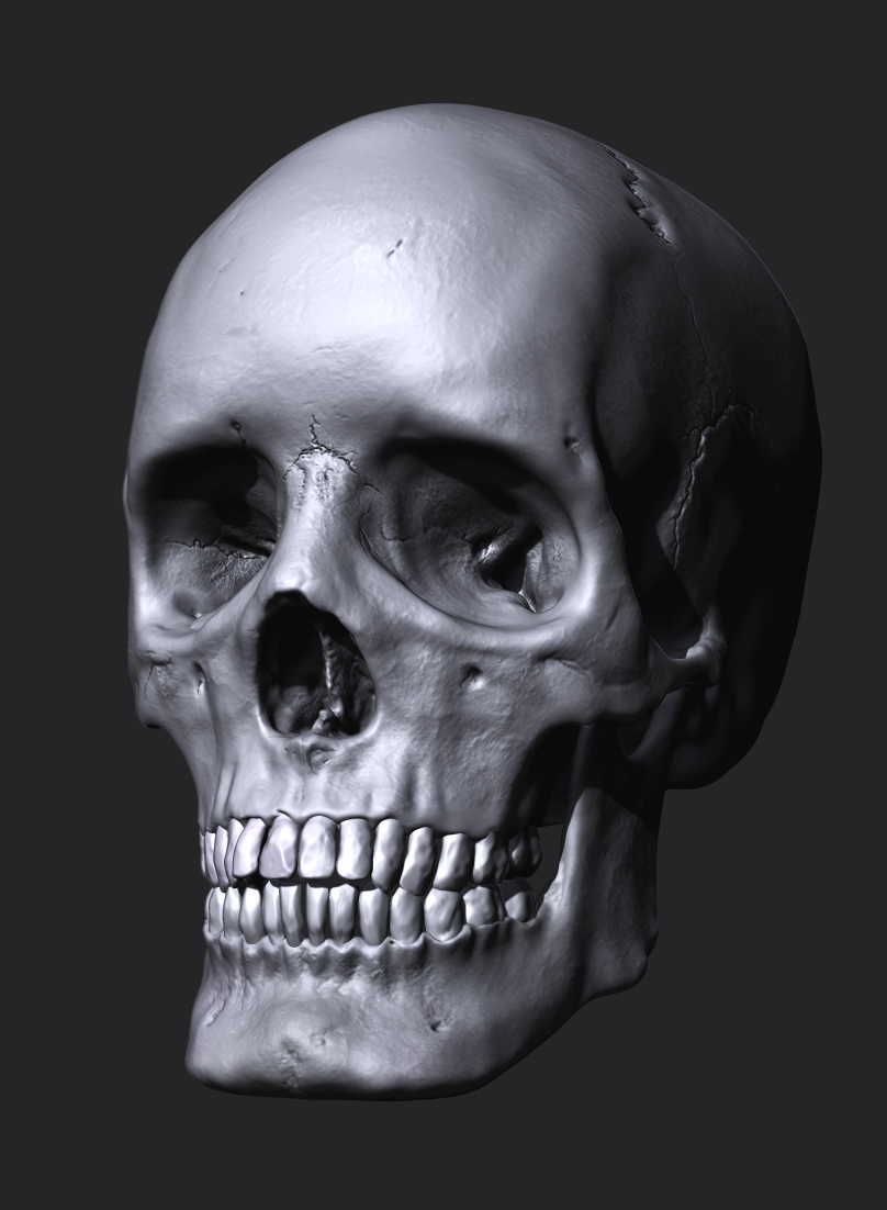 This study of a Female skull was based on life references, one of a few done in the last year.