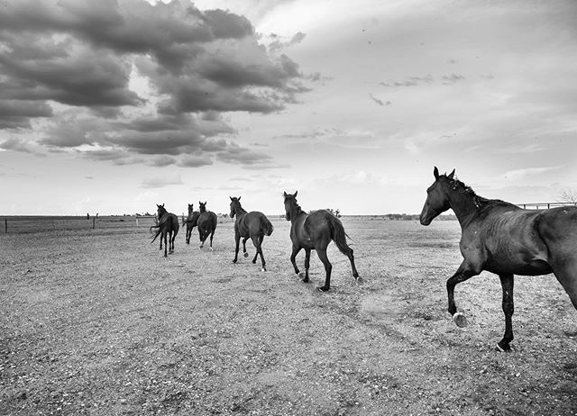 Outback horses. . . . . . #outback #longreach #outbackqueensland