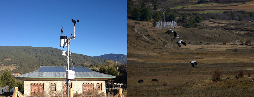 (Left)  A HEROES weather station at a school in Bumthang //Photo credit: Julia Novy-Hildesley.  (Right)  Black-necked cranes in the Phobjikha Valley //Photo credit: Gary Braasch Photography