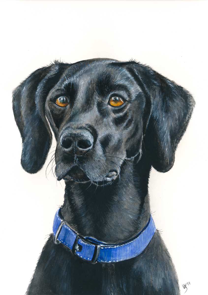 """""""I am absolutely in love with my portrait of my beloved Gerry! Zoe has captured his spirit and personality perfectly, and it is one of the best presents I've ever received. It's such a special keepsake and Zoe is insanely clever at what she does.""""  Mandy Fita, Benalla"""