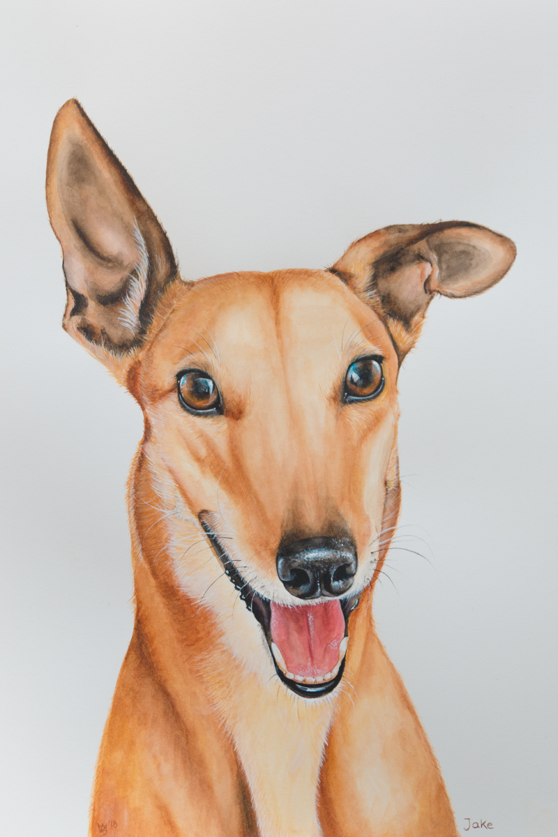 Jake Quirky painted Pet Portrait Grey Hound - Zoe Wood 2018 (1 of 1).jpg