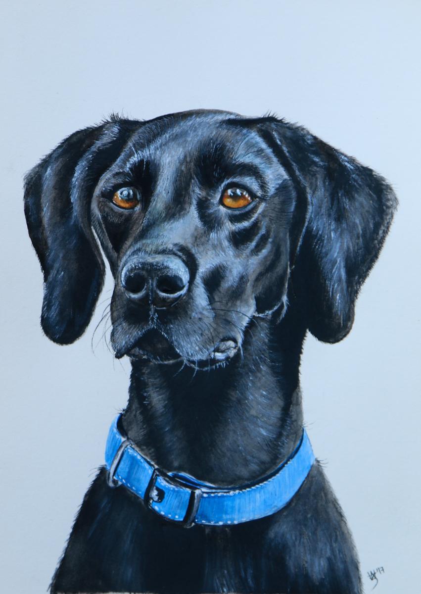 Gerry - Watercolour Pet Portrait - Zoe Wood 2017 (1 of 1).jpg