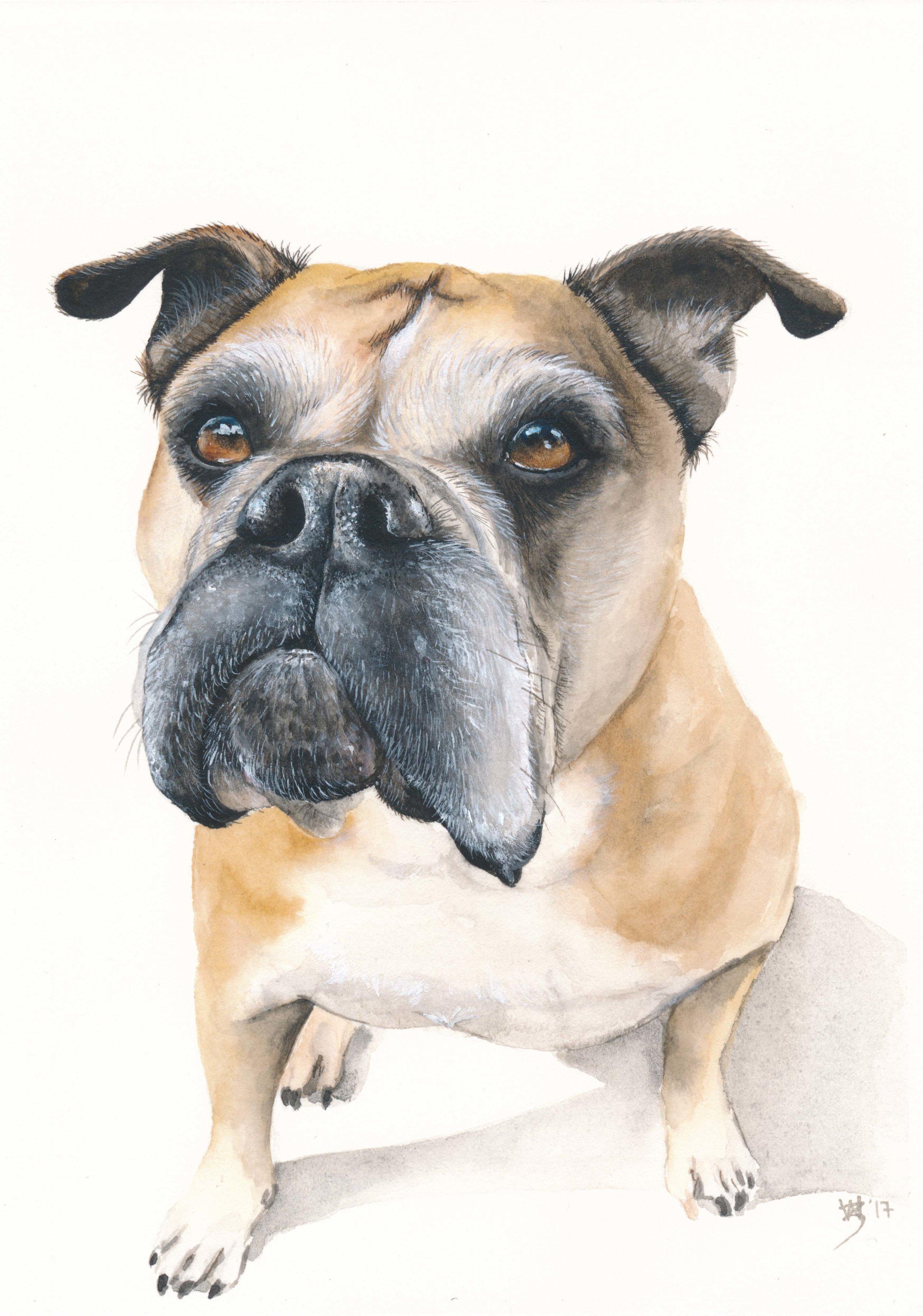 Brutus A5 Portrait watercolour - Zoe Wood 2017.jpg
