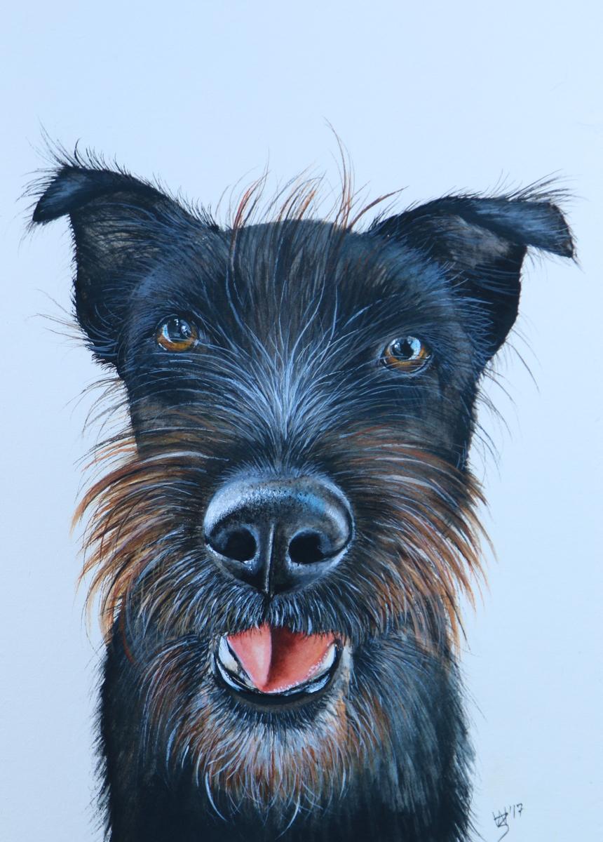 Judd - watercolour pet portrait - Zoe Wood 2017 (1 of 1).jpg