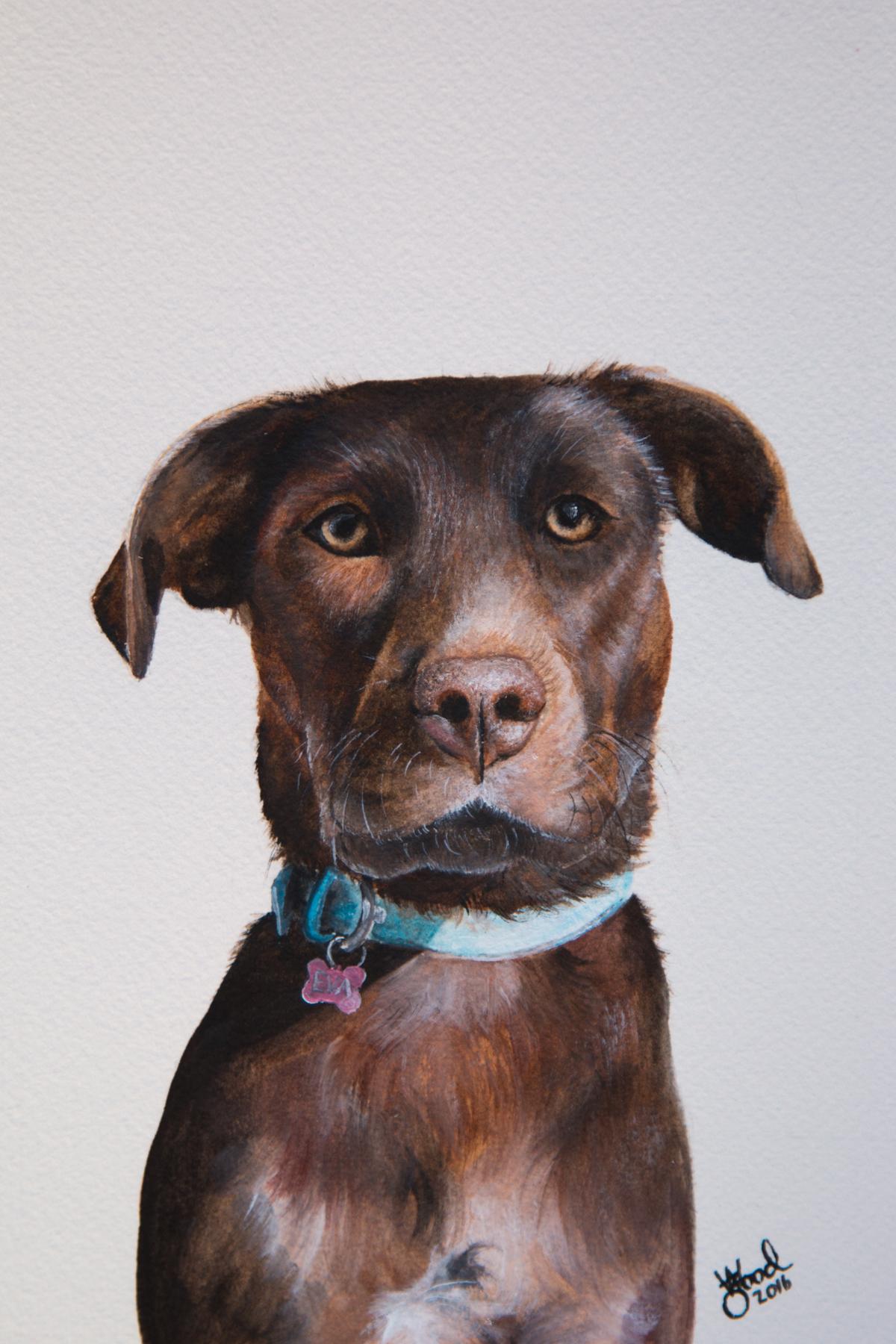 Eva pet portrait - Zoe Wood 2016.jpg