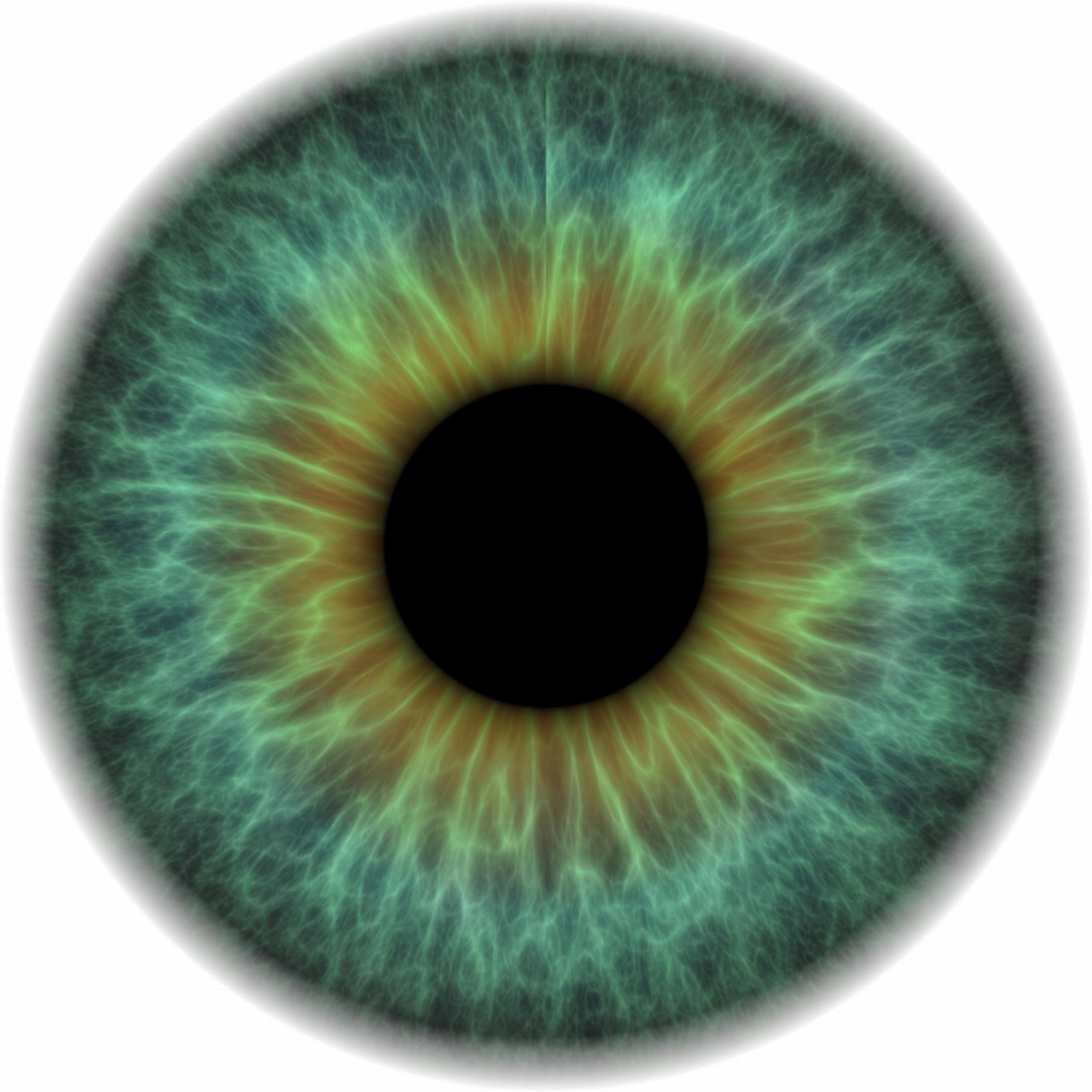 human iris.jpg