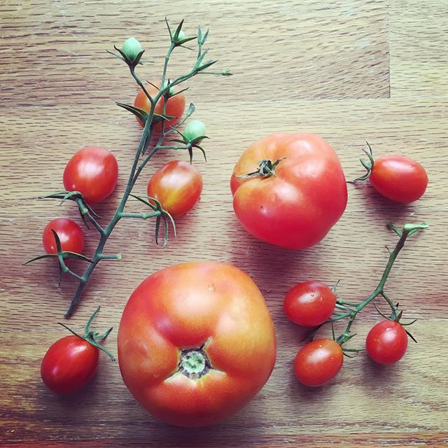 Fresh from the vine, some edibles for my next still life sketch #tomatoes #stilllife  #foodart