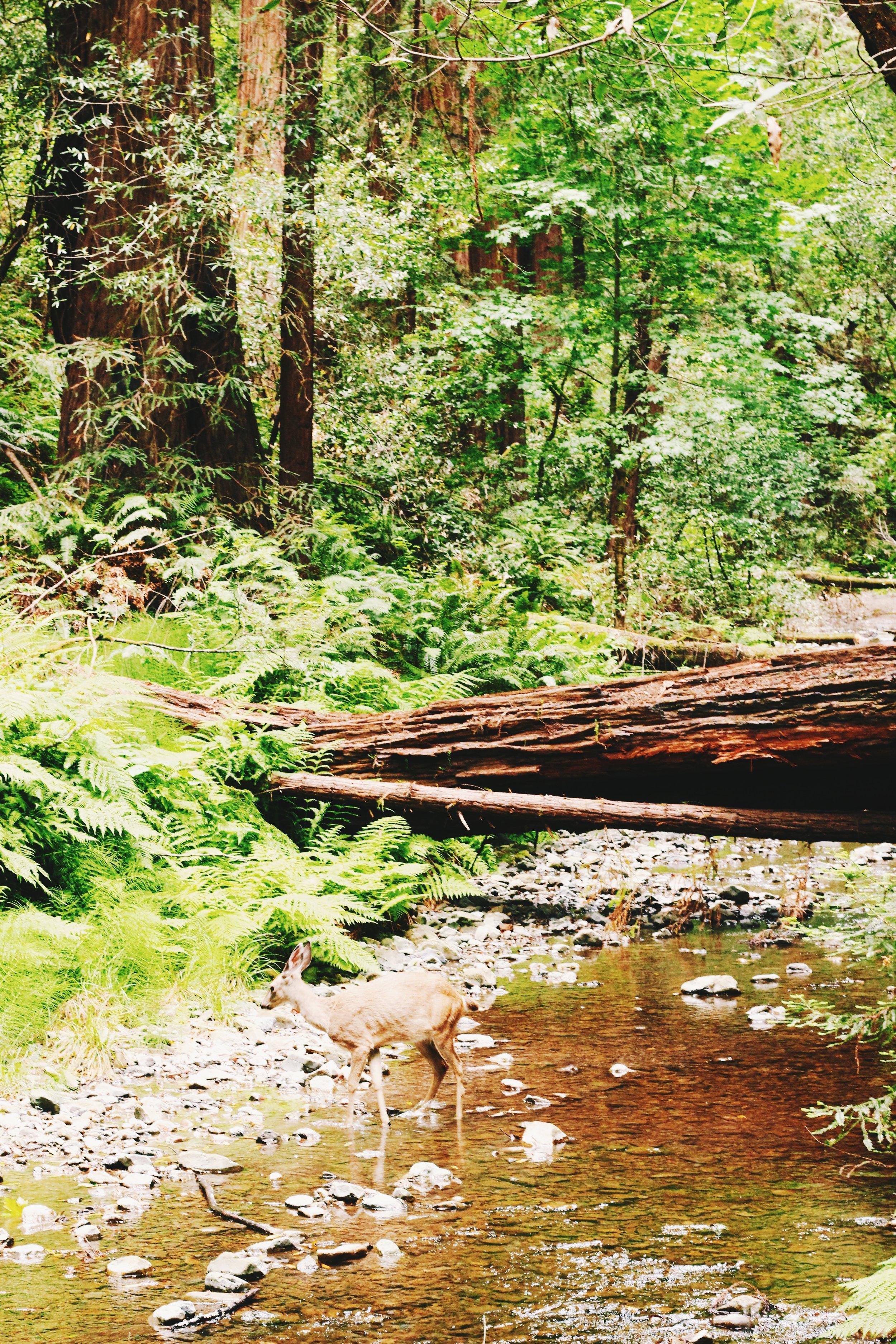 muir woods. california road trip