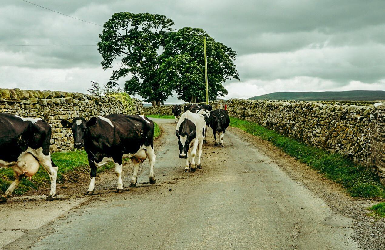 Traffic Jam Yorkshire Dales, U.K.