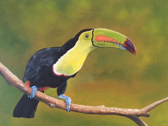 Toucan, oil on canvas completed