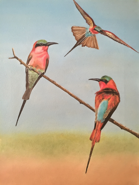 Southern Carmine Bee-eaters