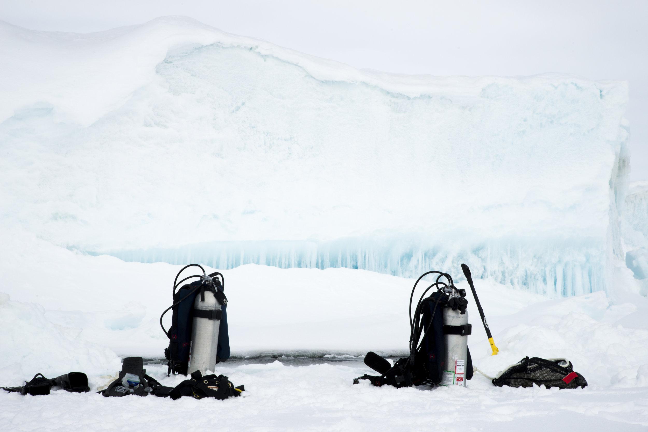 Credit: Françoise Gervais / Arctic Kingdom