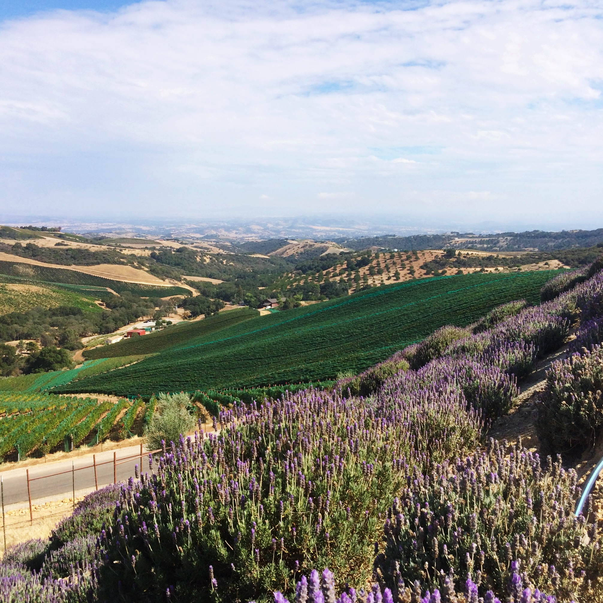 The Prettiest views came courtesy of Daou Winery. I could have sat outside in their stunning courtyard sipping chardonnay all day.