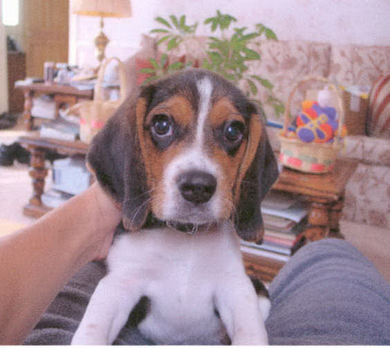 Rocco the day that I brought him home.