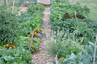 The Duggan Community Garden
