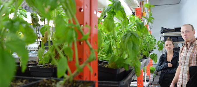 Ryan Mason and Cathryn Sprague of Reclaim Urban Farm showing off their herb and micro-green operation.