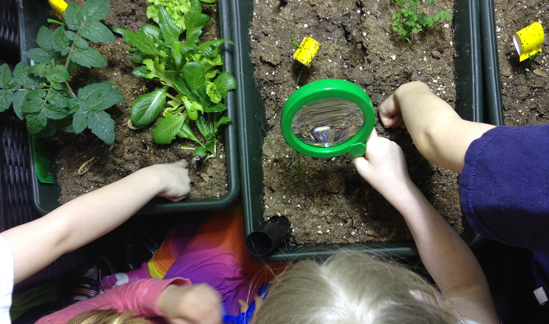 "- ""Students are excited to observe and record changes in their plants every day. 'Keeping a plant alive is hard work!'"" Comment from Grade 4 student in St. Albert"