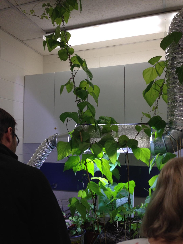 Albert visits an indoor garden with pole beans.