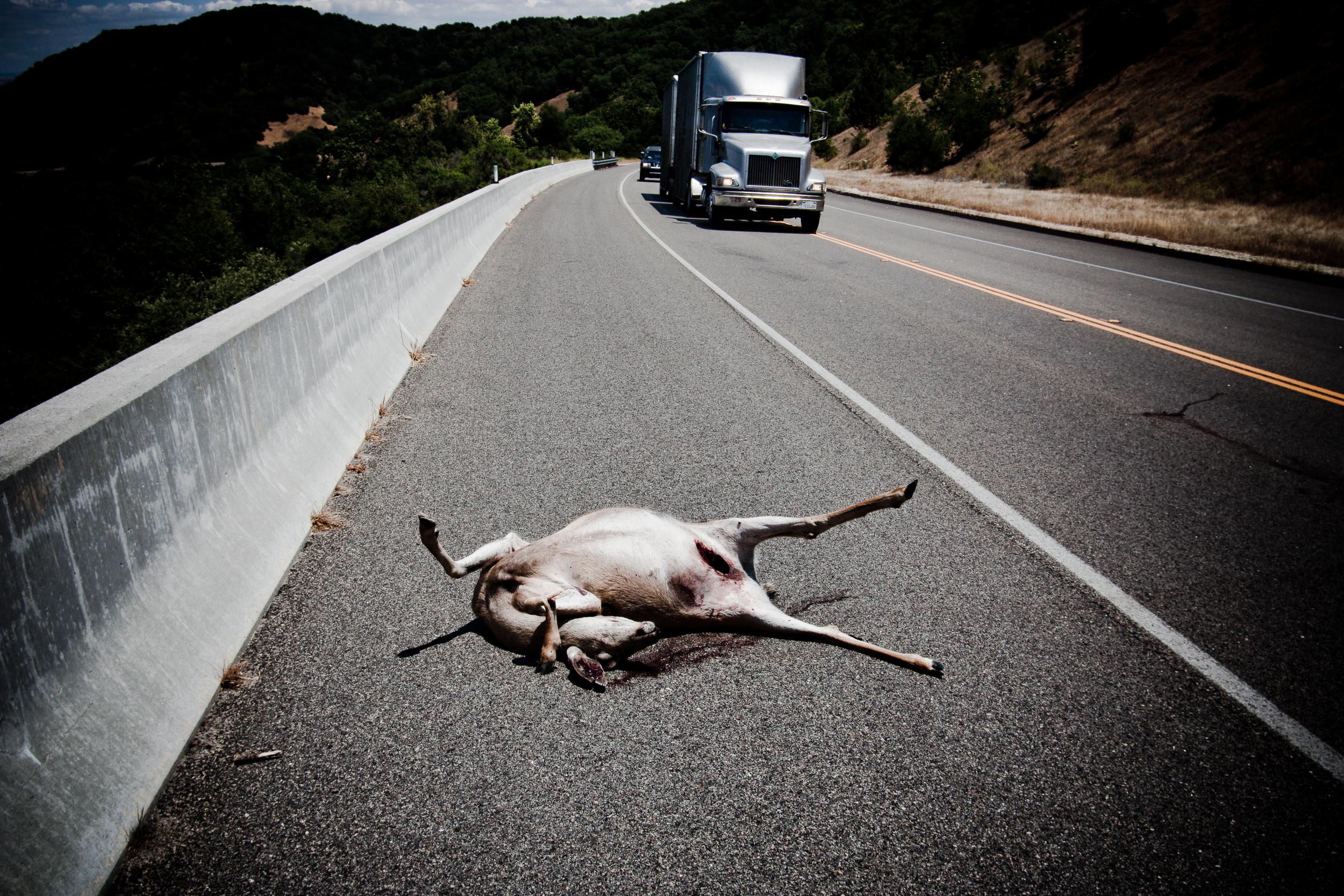 Roadside Victim