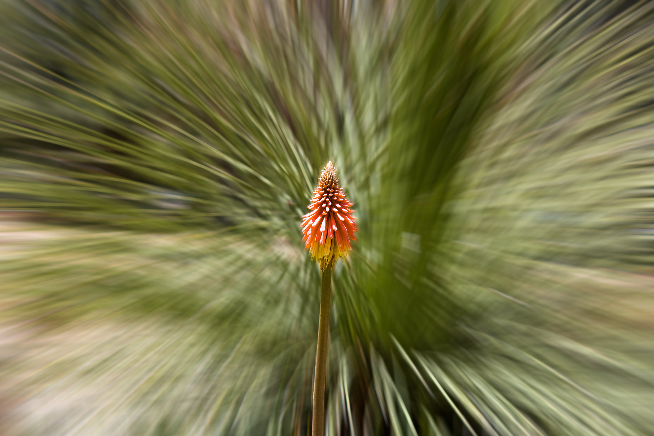 Fast Flower